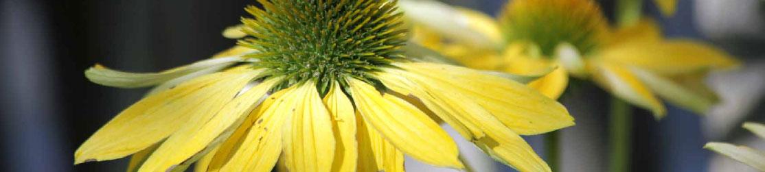 Baumschule Dietrich Blumen