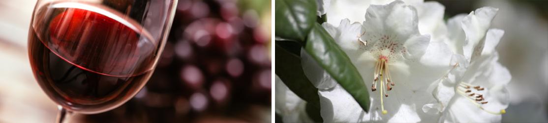 Weinglas neben Frühlingsblume